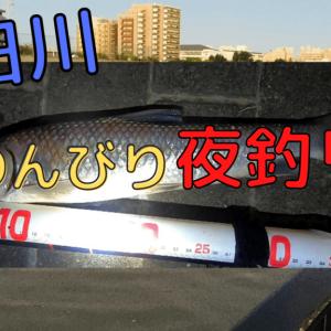 【隅田川で夜釣り】大型ニゴイとセイゴに遊ばれた日【2020年】