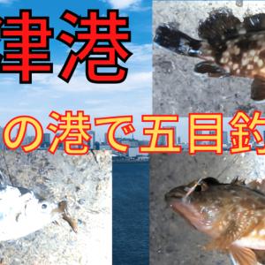 【沼津港】五目釣り達成も毒魚多め!【カサゴ、アイゴ、ヒイラギ・・・】