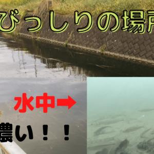 多摩川で釣り&水中動画撮影!釣れないけど10種類程撮影成功!