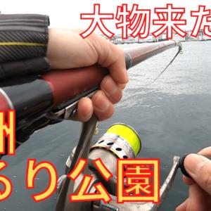 【豊洲ぐるり公園】サビキで釣ったコハダを泳がせたら大物が釣れた!
