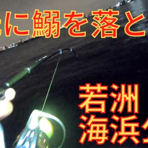 【若洲海浜公園釣り】サビキで釣った鰯を足元に落とすと・・・【再開した堤防を調査!】