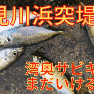 【検見川浜突堤防】サビキ釣りでアジ、サバ、コノシロ【釣果あり】
