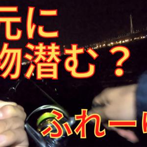 【ふれーゆ裏で釣り!】60cmシーバス、カサゴ、サッパの釣果