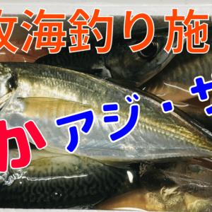 【本牧海釣り施設】サビキ釣りでサバ、大アジの釣果
