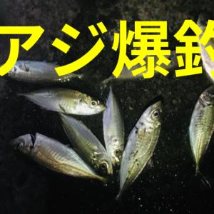 【釣果有】芝浦南ふ頭公園でサビキ釣り!アジ爆釣!【2021年】