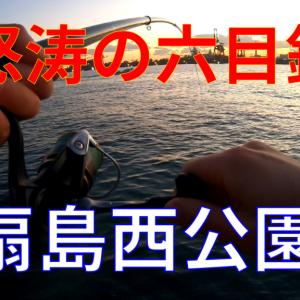 【2021年】東扇島西公園で夕~夜釣り!カサゴ、アナゴ、コハダ、メバル・・・【釣果】
