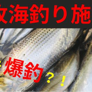 【本牧海釣り施設】サビキでイワシ爆釣!アジ、サバ、コノシロの釣果!