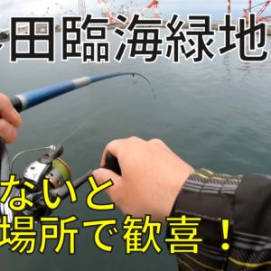 杉田臨海緑地でサビキ釣り!アジ、メバル、カレイ、イワシの釣果【2021年】