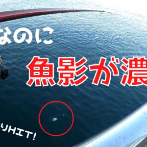 【2021】うみかぜ公園で釣り!タチウオ、カレイ含む五目達成【釣果有】