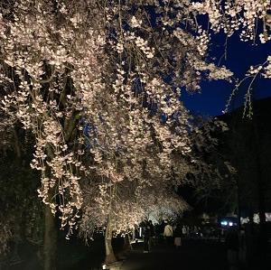 いなかの道楽~海と甘味と桜~