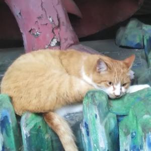 【九品仏浄真寺】伍~猫ちゃんズに歓迎されました~