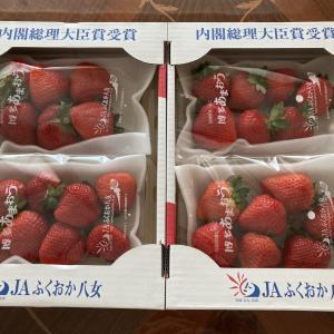 ふるさと納税♡福岡あまおう苺が届きました♡