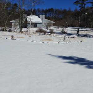 ちょっと積もった雪の中、お散歩