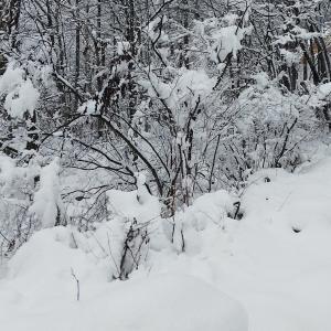 結構な雪、マイケルThis is it、 そして雪かき
