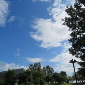 今日も晴れて秋(?)空です