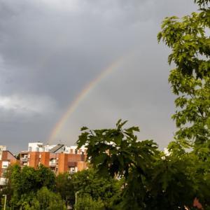 虹と植物ジャンキー