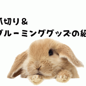 [更新]うさぎ飼育において定期的に必要な爪切り&グルーミンググッズの紹介