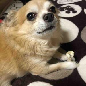 愛犬「呼ばれて🤗」【愛犬】