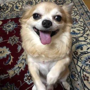 「おねだり」してまーす😅【愛犬】