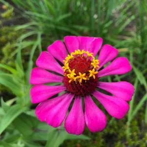 かわいい ピンク色の花 【写真・花】
