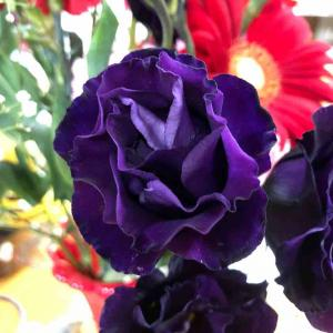 とっても素敵な紫の花 【写真・花】