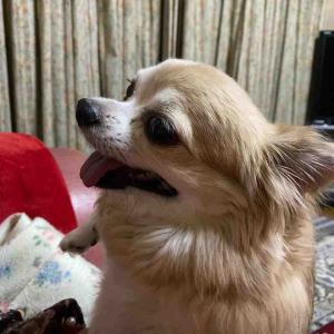 今日のイヴ🤗 甘えてます🤗 【愛犬】