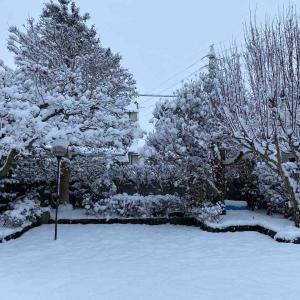 大雪 庭も真っ白😅 雪景色です❄️【写真・庭】