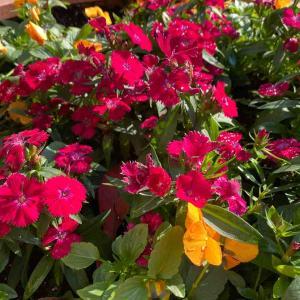 花壇の花々 おはようございます💕 お天気が良くてお花の色も更に鮮やかな気がします🤗【写真・花】