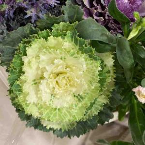 葉牡丹(ハボタン) 素敵なグリーン系 おはようございます🤗 【写真・花】