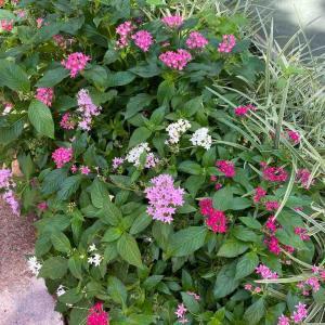 天神の花壇 おはようございます🤗 9月22日【写真・花】