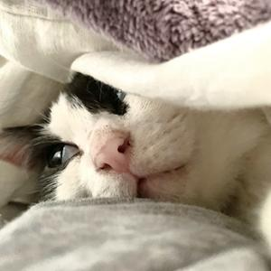 にこにこ寝んね