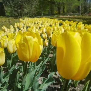 マドリードで一番好きな場所は王立植物園です