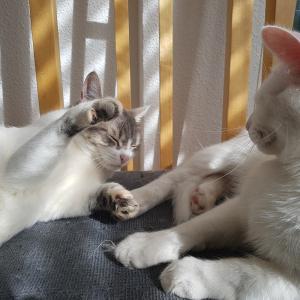ポンポンで猫大満足なキャットタワー