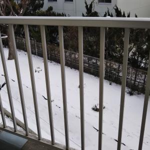 初めての雪だるま&父の暴言に辟易