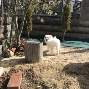 ウチの庭に梅干し投げたヤツがいるんだが?