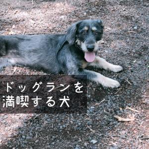 ドッグランでぼっち犬→走る犬