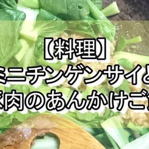 【料理】ミニチンゲンサイと豚肉のあんかけご飯🍚