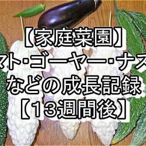 【家庭菜園】トマト・ゴーヤー・ナスビなどの成長記録【13週間後】