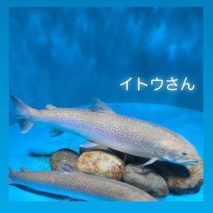 【不思議】魚は虫歯にならないの⁉️