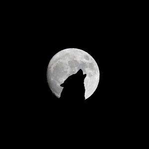 【初心者にも分かりやすい】人狼のルールとやり方