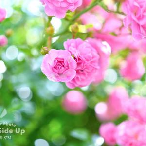 花写真 n832