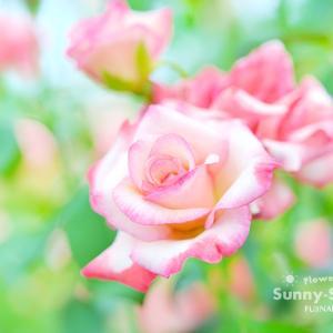 花写真 n859 ジェミニ