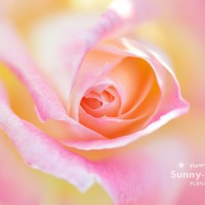 花写真 n881 エレガントレディ
