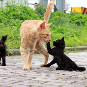 猫がさぁ・・・・猫がさぁぁぁぁぁ!!!