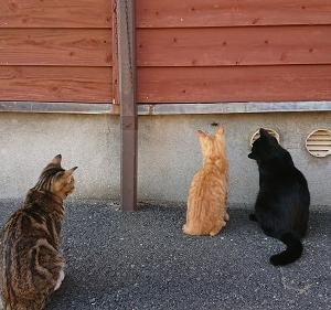 近所に住んでる野良猫さんのその後?みたいな事