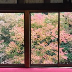 紅葉絶景の「環境芸術の森」&くわがたが売ってる「道の駅 厳木」、水と緑の「道の駅 大和」(佐賀県)