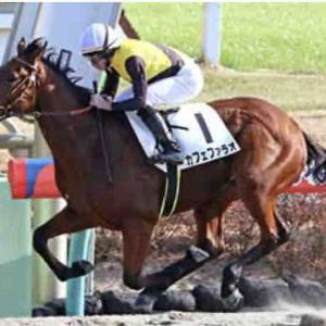 今年は本当に3歳馬がとんでもなく強い!!ダートカフェファラオ勝ちタイム1.34.9は相当優秀