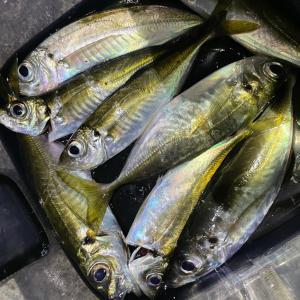 鯵の釣れるタイミング研究