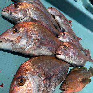 タイラバの釣れる条件整理