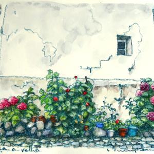 小さな村の紫陽花